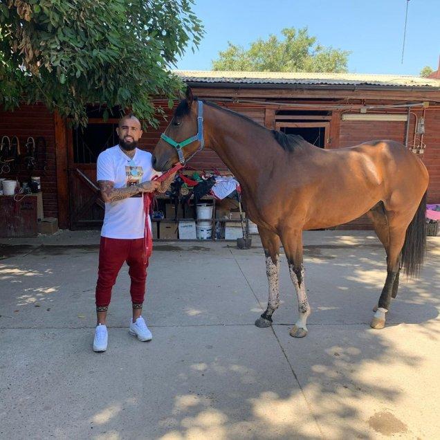 Fotos] Arturo Vidal mostró los nuevos ejemplares de su criadero de caballos  Haras Il Campione - AlAireLibre.cl